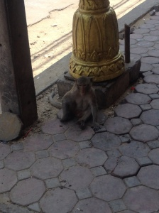 My first monkey sighting of the day.
