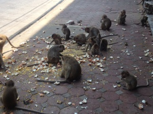Monkeys eating their feast off the pavement.