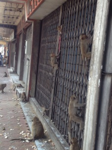 Monkeys literally took over this street, passing between the gaps of this seemingly abandoned building.
