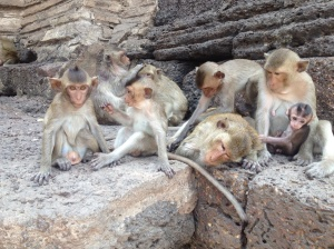 I was able to get right up close to the monkeys, yet they paid me little attention, at first.
