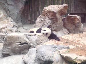 Sleeping panda.