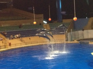 Synchronised jumping in the dolphin show.