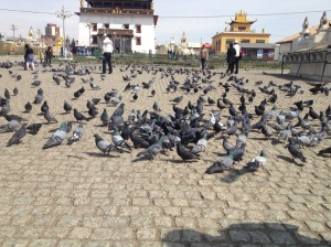The mass of pigeons outside the monastery.