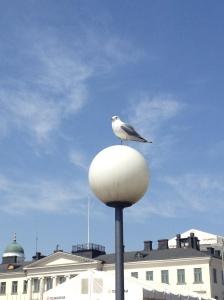 One of the menacing seagulls.