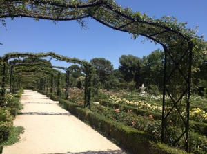 The rose gardens in Parque del Buen Retiro.