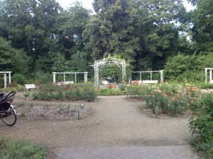 A rose garden within the Tempelhof airport park.