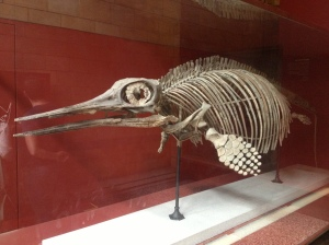 An ichthyosaur skeleton in the Natural History Museum.