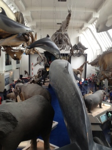 The mammal room is packed full of life size replicas of modern mammals.