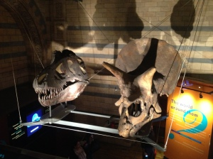 Skulls of a triceratops and an allosaurus.