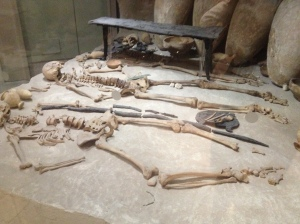 A perfectly preserved pair of skeletons on display in the museum.