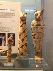 Mummified cats inside the British Museum.