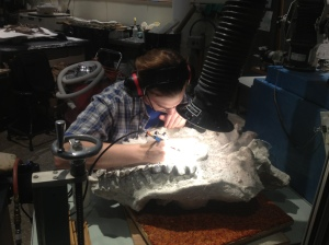 One of the scientists working on uncovering a fossil.