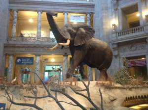 Elephant in the main lobby of the Natural History Museum.