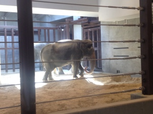 One of the zoos three elephants.
