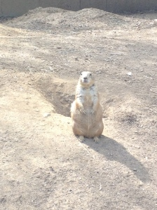 I don't know why but I found the expressions of the prairie dogs hilarious.