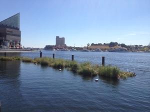 The floating wetlands in Inner Harbour.