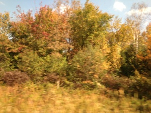 Upstate New York at the turn of autumn.