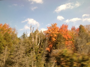 The timing of my trip was so perfect that I observed foliage of both green and red, as the former gave way to the latter.