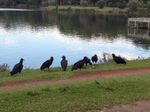 Some variety of carnivorous bird I found near the lake.