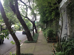 The streets of São Paulo appear to have been sprinkled with tiny rainforests of their own.