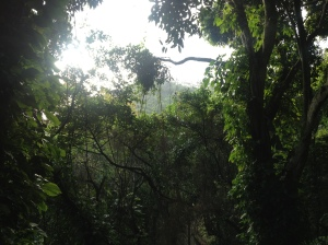 The park was a pristine section of rainforest tucked away behind some of the more expensive houses in Rio.