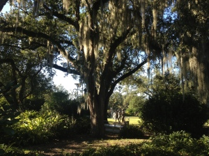 City Park is also home to the New Orleans Botanical Garden.