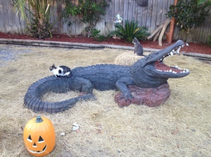 At least the cats aren't afraid of the alligators.